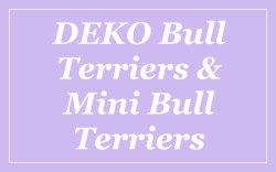 dekko-bull-terriers